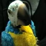 FTI parrot